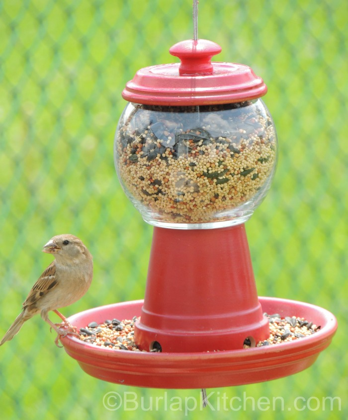 Bubble gum bird feeder final 2