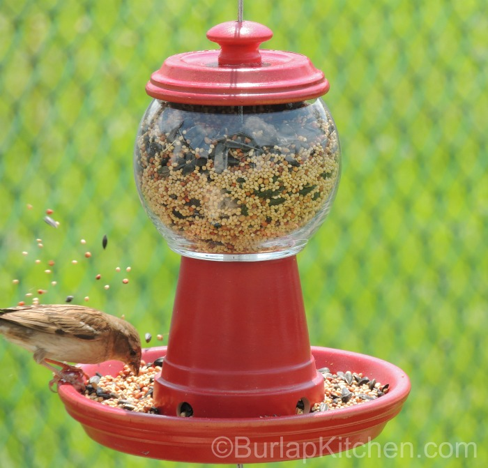 Bubble gum bird feeder final